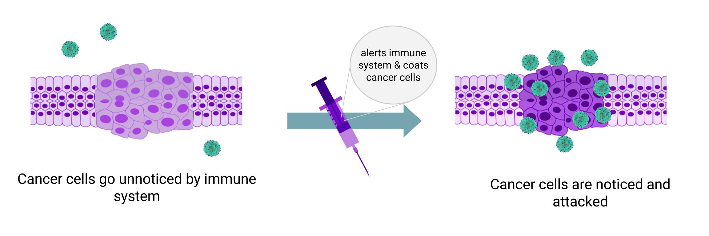 Immunoengineering a Better Cancer Treatment